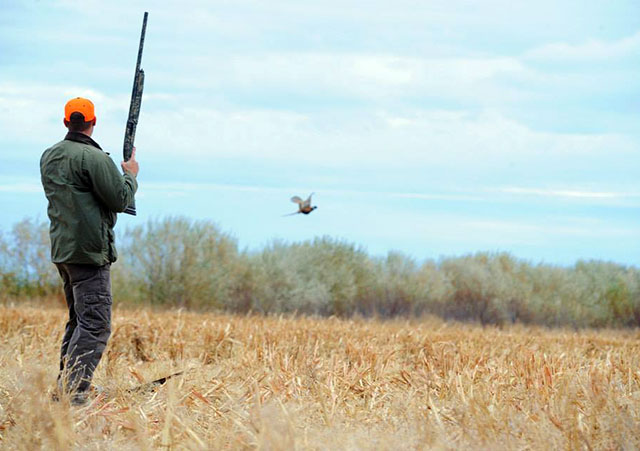 Beastrom Ranch Pheasant Hunts
